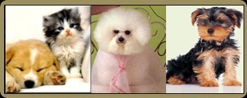 Dog Grooming Styles